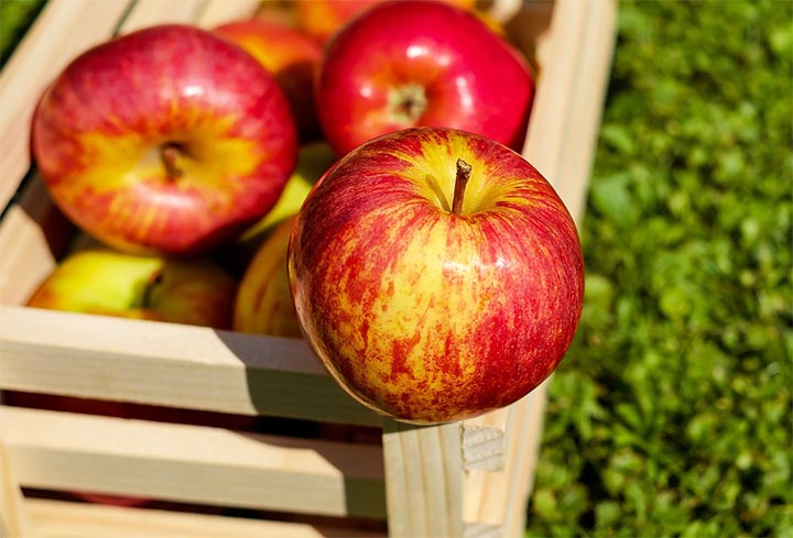 red apples which are used to make apple cider vinegar